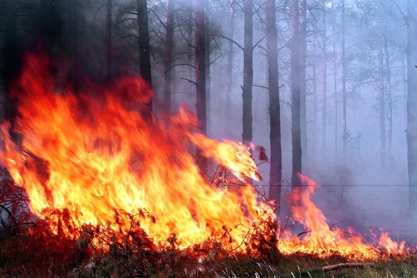 ГСЧС: лес площадью 5 га полыхает вХерсонской области