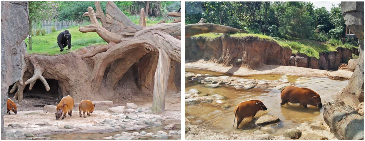 Zoo (5)