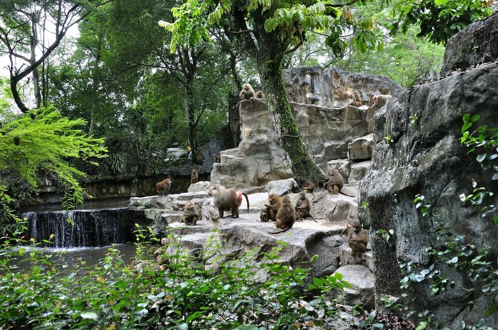 Zoo (9)